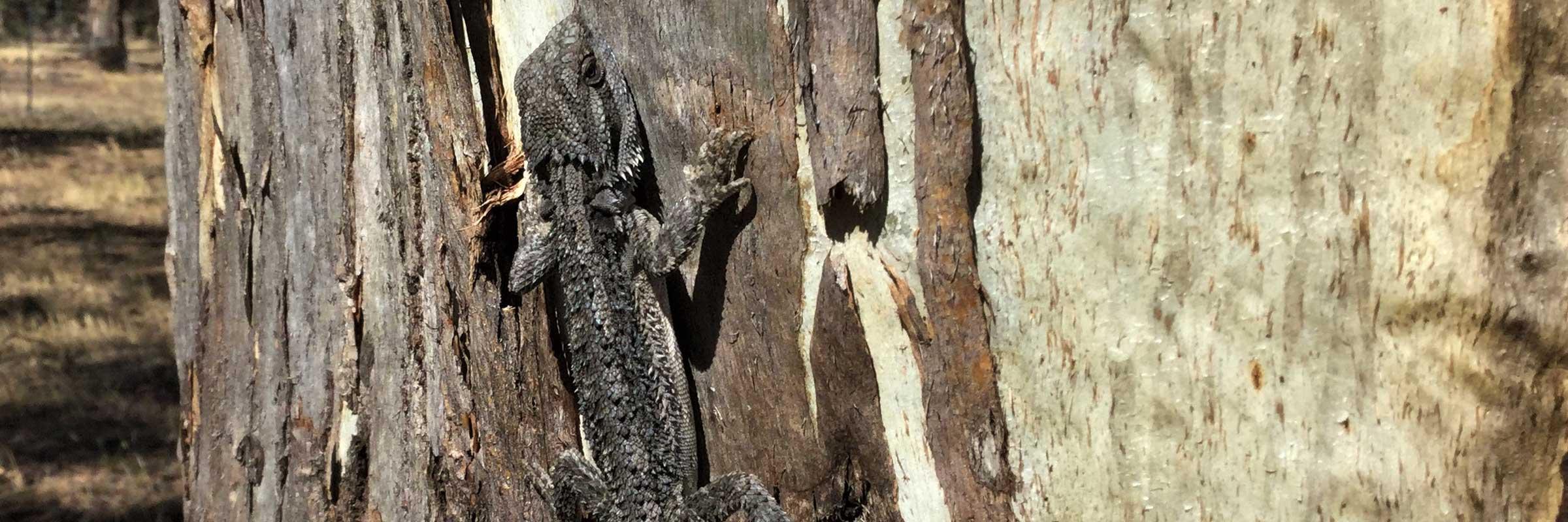 lizard-photo-slider-op