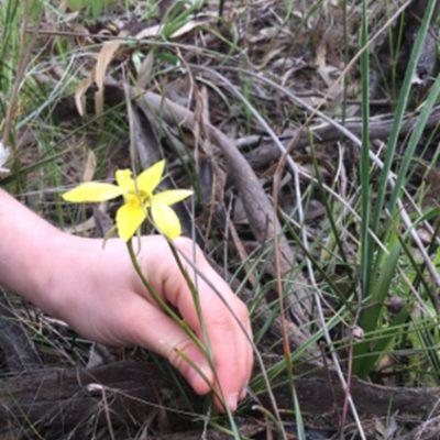 Nourishing Our Children – Body, Soul & Spirit – Through Nature Study
