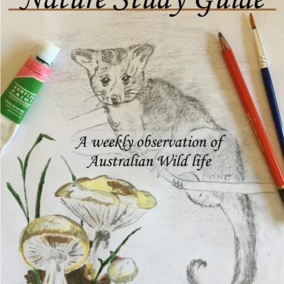 A Look at the Australian Nature Study Guide | Autumn / Winter | Volume 2