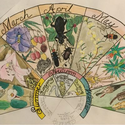 Phenology Wheel | July