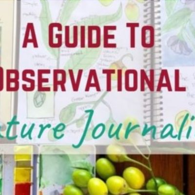 A Guide to Observational Nature Journaling