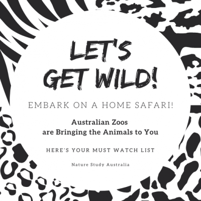 Isolating? Let's Get Wild with a Home Safari