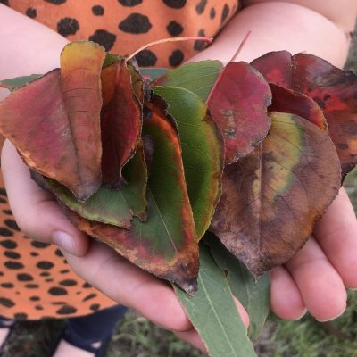 Autumn Leaf Board