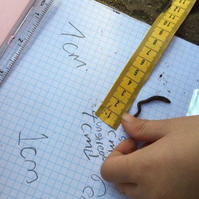 Measuring Earthworms