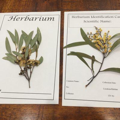 Make Your Own Herbarium